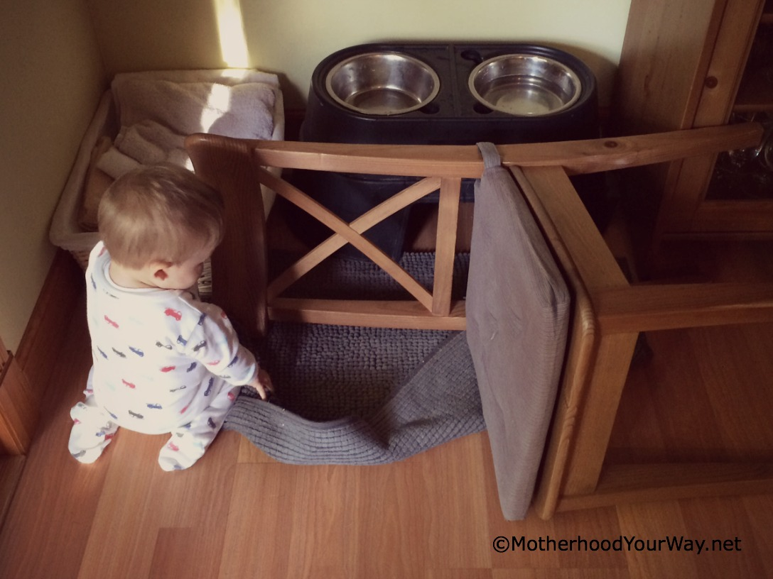 Baby Versus Dog Bowl
