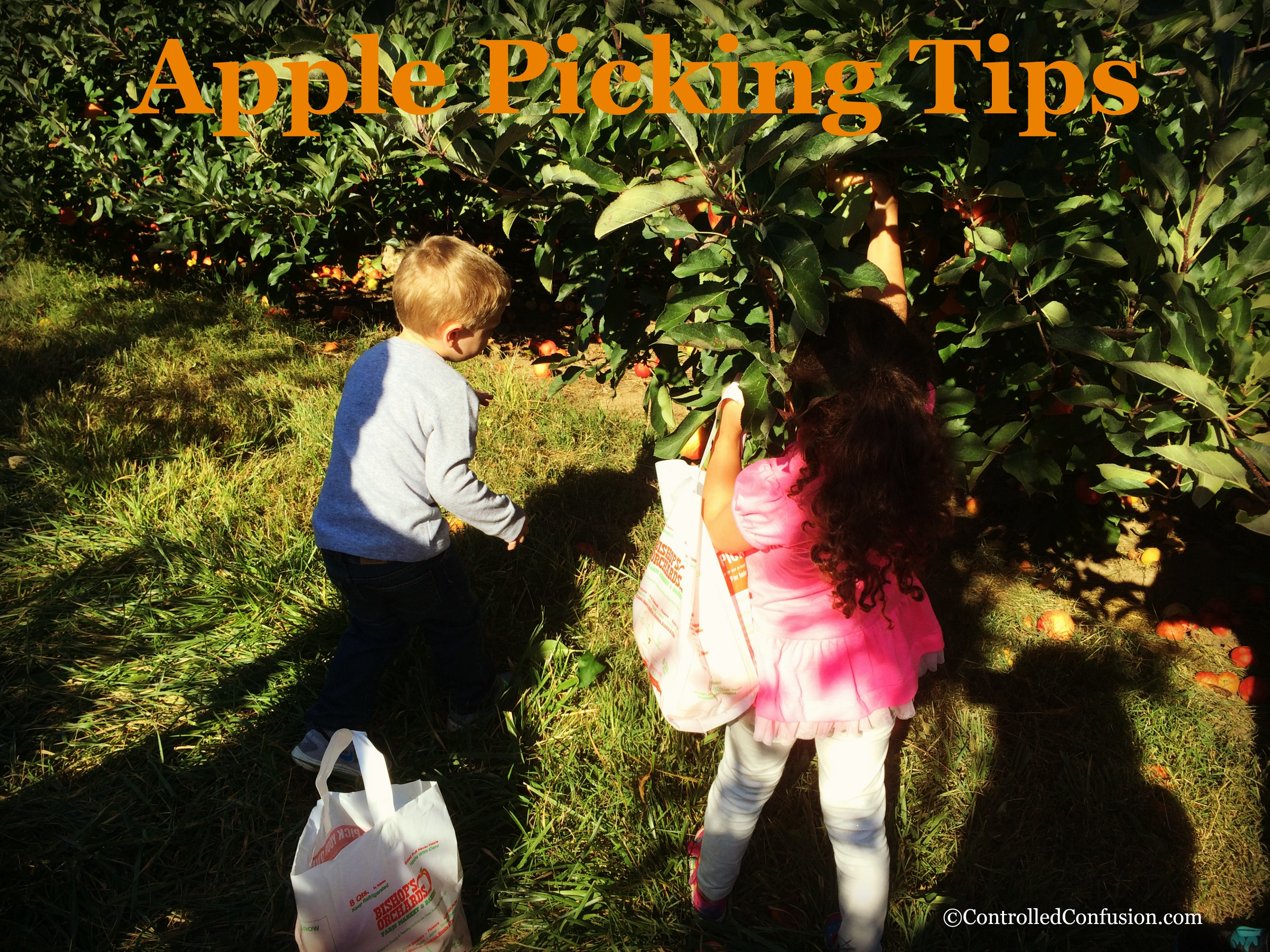 Tips for Apple Picking This Fall #FallFun31