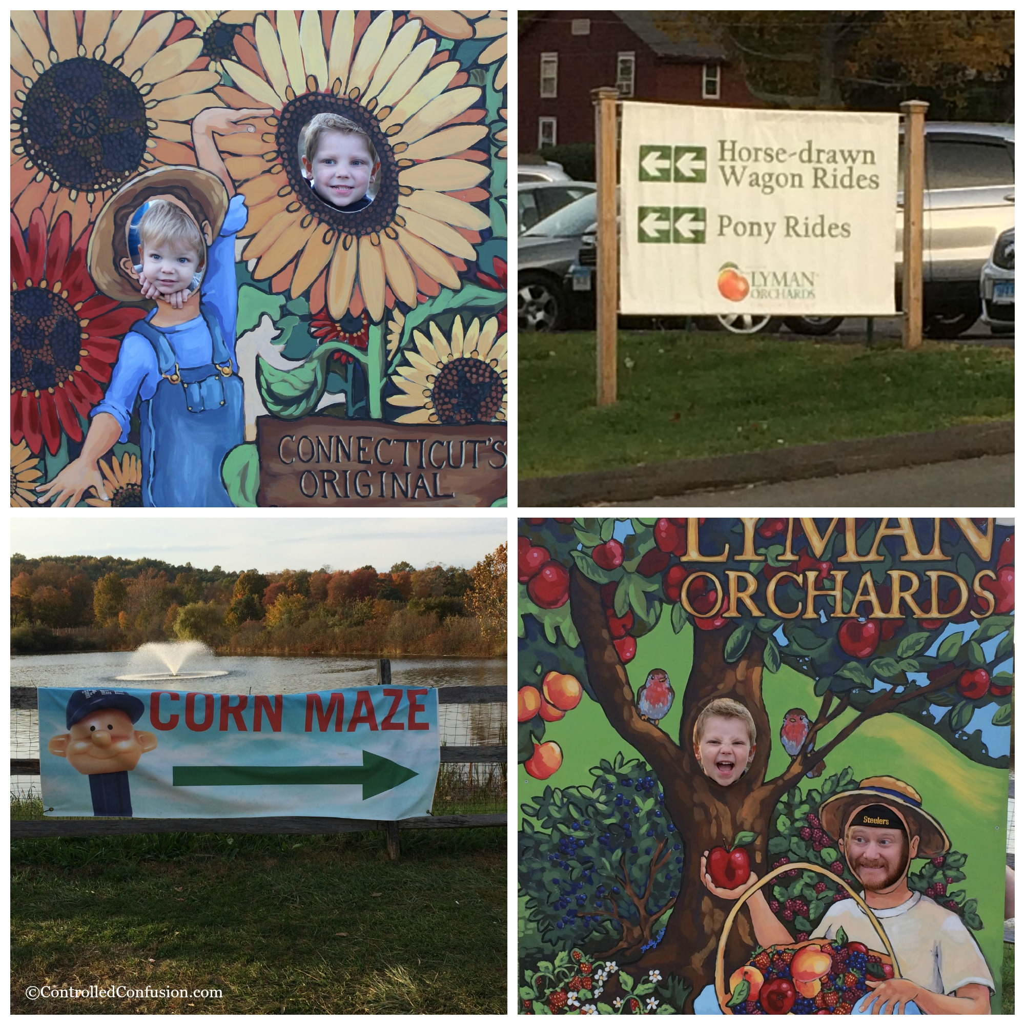 Family Fun At Lyman's Orchard for Our #LexusHarvest #FallFun31